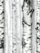 Andrea Rossi Sicily 54198-1 обои виниловые на флизелиновой основе